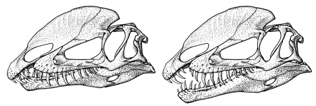 Dilophosaurus wetherilli jaw closure comparison
