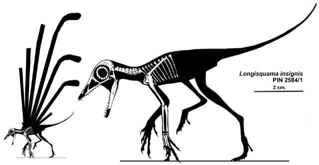 An outdated reconstruction of Longisquama insignis (Sharov, 1970), with the limbs held in an erect, potentially terrestrial posture. (I no longer agree with this interpretation.)
